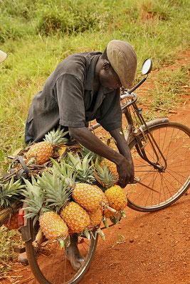 Transport saftiger Ananas