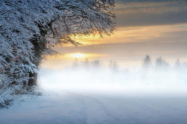 Morgenlandschaft im Südschwarzwald; 11.1.2019 (gleiches Bild, mehrfach manipuliert: Bodennebel, verschneite Spuren)