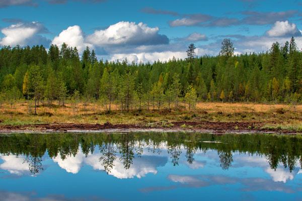Borealer Herbstwald im Spiegel des Bärenteichs
