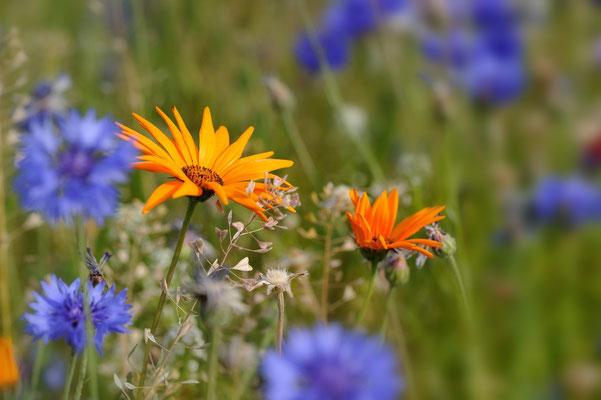 Nur 4 1/2 Monate Nicht-Winter; Fairbanks (unter anderem) liebt die Flora