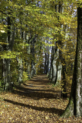 Waldkathedrale Beromünster; 30.10.2020
