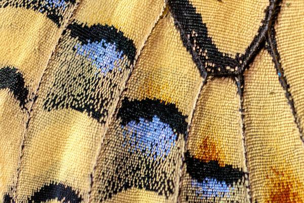 Farben und Strukturen der Flügel