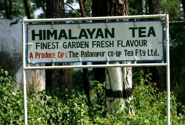 Teeplantagen und -Trocknerei im Kangratal, Himalaya