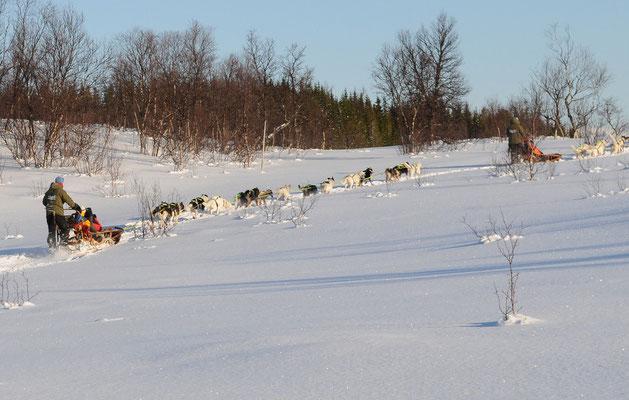 Hundeschlittenfahrt Nähe Tromsö