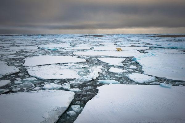 'Eisbär'; Siegerbild Kategorie 'Säugetiere'; Wettbewerb Naturfotografen Schweiz 2018; aus 1150 Bildern von 77 teilnehmenden Naturfotografen