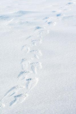 Auf den Spuren des Eisbären in der Arktis; 13.-23.9.2017