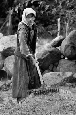 Bauerstocher bei der Feldarbeit auf der eigenen Scholle, Ladakh (Kaschmir), Cousine des Guide von Leh
