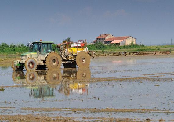 Arbeit auf dem Reisfeld Nähe Vercelli Piemont