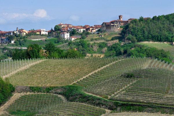 Weinberg vor Monta bei Canale