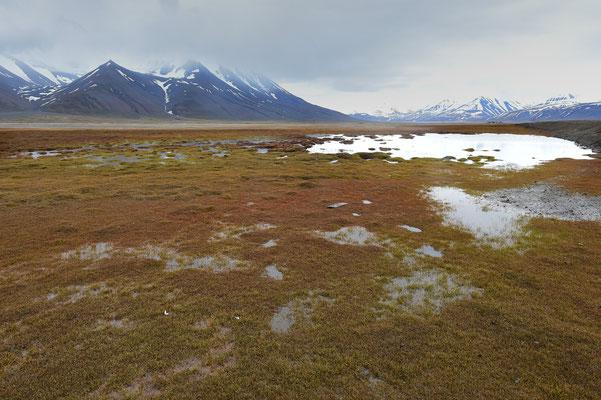 Tundra bei Longyearbyen; 5. Juli 2015