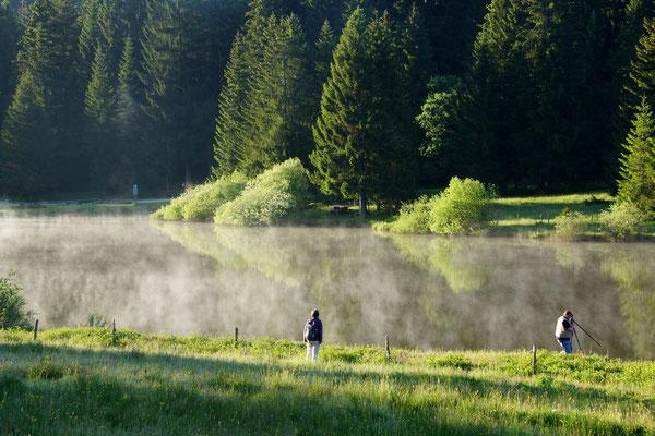 Frühbegegnung in den Freibergen: Plain de Saigne, Montfaucon; 4. Juni 2015; Bild Guido Viel [merci beaucoup :-) ]