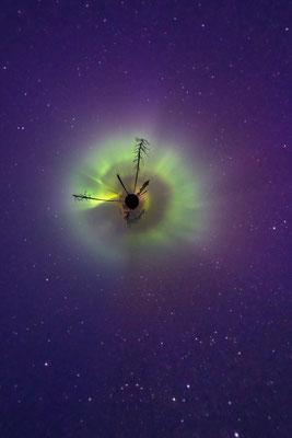 Die kleine Welt des finnischen Herbstwaldes erlebt ihre Aurora