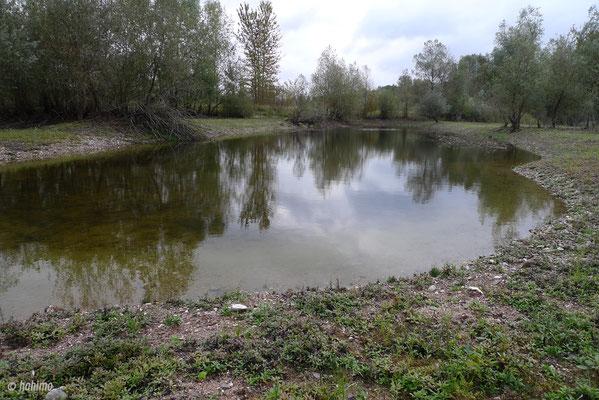 Dieses Kleingewässer befindet sich in der Nähe des neuen Brutplatzes.