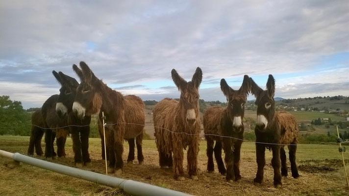 De gauche à droite, Visvy, Valette, Maya, Hashtag et Hexile.