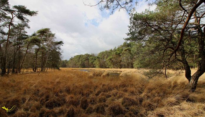 Heidemoor 1