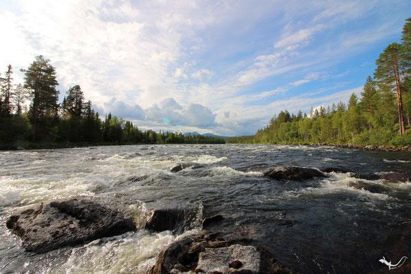Trysilelv (Norwegen 07 2019)