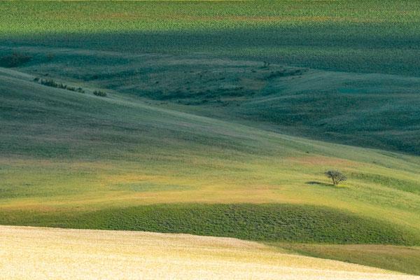 Destructed steppe - Kakheti