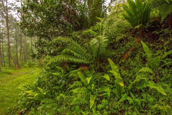 Subtropical Rainforest - Adjara