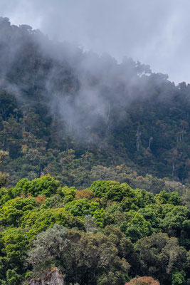 Quetzales National Park