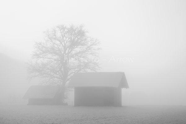 Noch ist der Nebel stärker als die Sonne