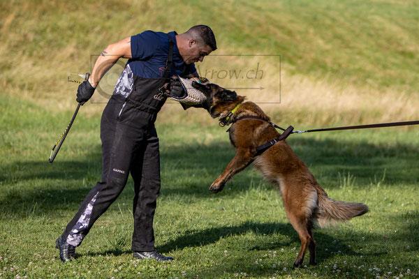Schutzdienst