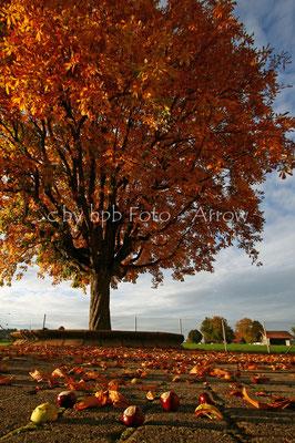 Herbst im Schulhausareal mit Kastanienbaum