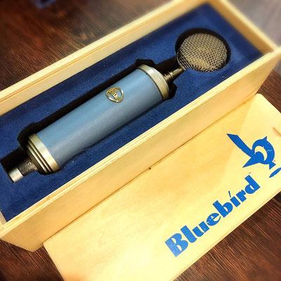 Blue Microphones / BLUEBIRD  ¥220/h