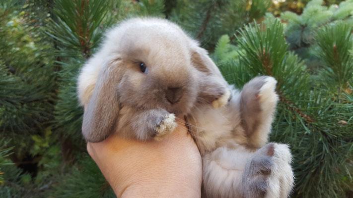 Cuccioli disponibili 39 casa fabri 39 allevamento e vendita - Lettiera coniglio nano ...