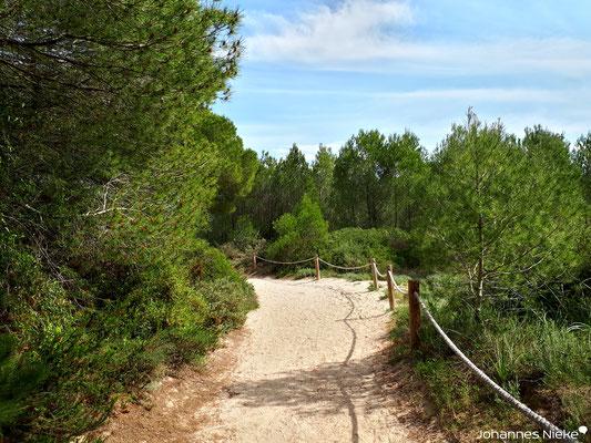 Dünenwald hinter der Playa de Muro