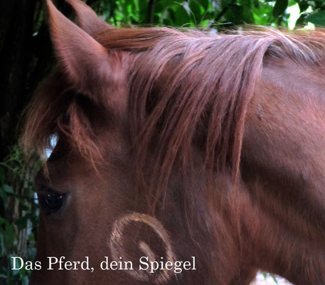 Das Pferd, dein Spiegel