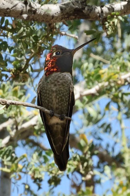 In einer riesigen Voliere gibts jede Menge Kolibries