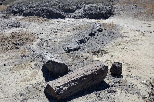 Immerwieder versteinertes Holz