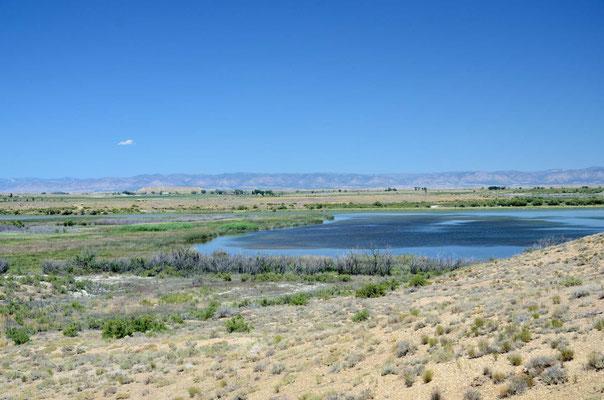 Ein Feuchtgebiet mitten in der Wüste (artesisches Wasser)