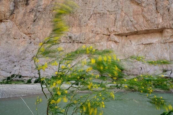 Sturm durch die Rio Grande George - der Sand fliegt