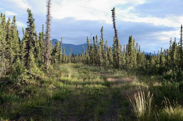 Auf der Nabesna Road in den Wrangell-St.Elias NP hineien