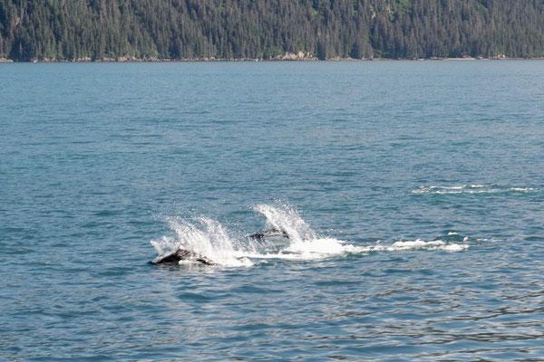 Ein Finnwal