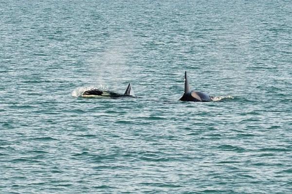 Zm Scluß sind auch noch die Orcas da!