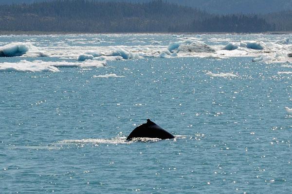 Und Buckelwale