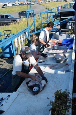 Professionelle Fischzerleger