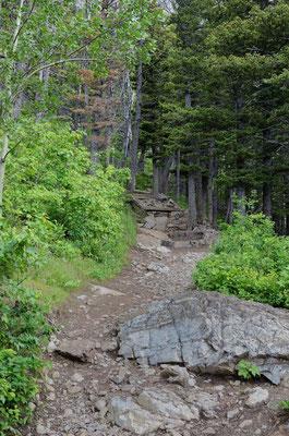 "Trail zum ""Bears Hump"""