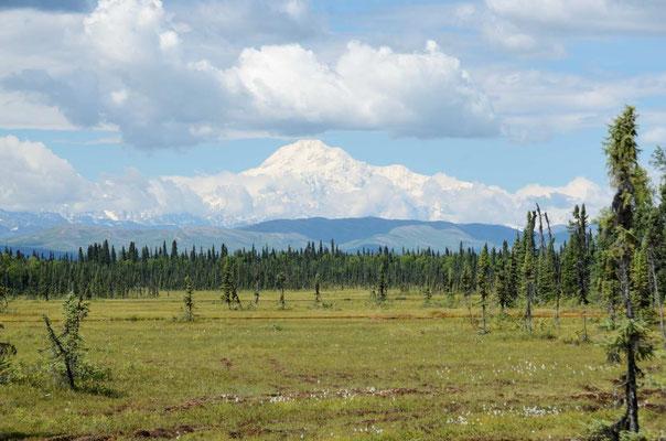 Dann der Denali (Mt. McKinley), mit knapp 7000m Höhe, der Höchste Berg Noramerikas