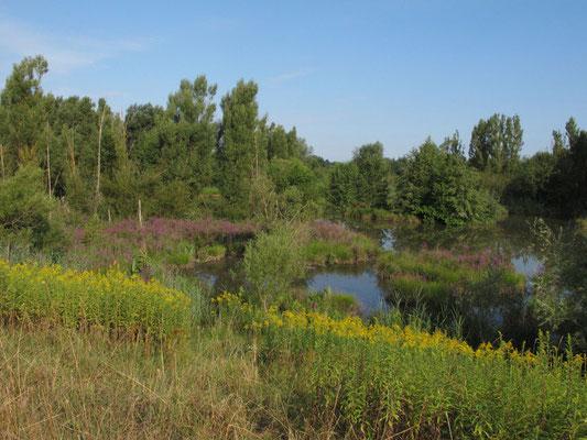 Altwasserbiotop LK Straubing, Foto: Michael Körner