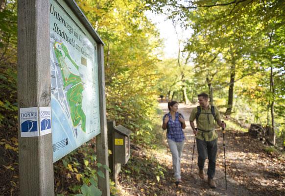 Stadtwald am Geiersberg © Tourismusverband Ostbayern e.V., Fotograf Stefan Gruber