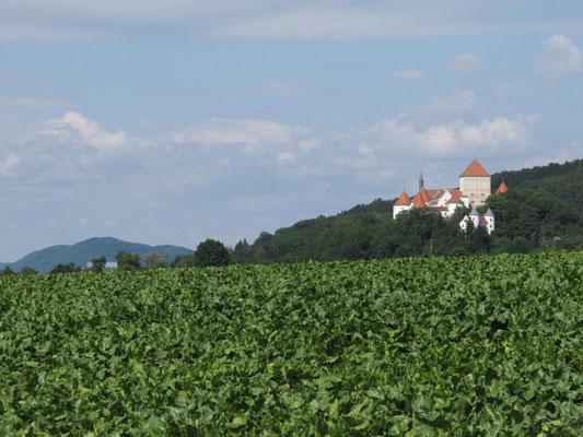 Schloss von Wörth a.d. Donau, Foto: Michael Körner