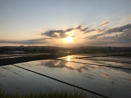 6月代かき後の日の出 さぁ田植えの開始です。