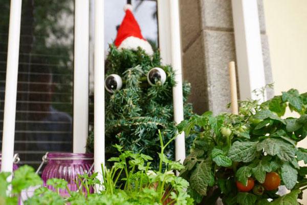 Der singende Weihnachtsbaum in der Kräuterecke