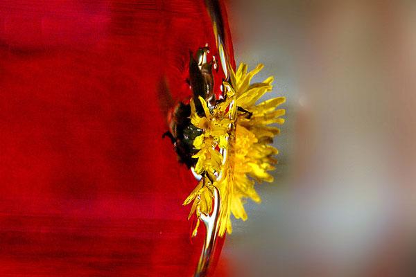 Gesangsunterricht München Sibylle Kult La papillon et la fleur
