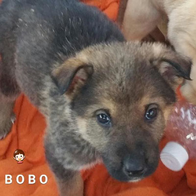 BOBO (adopté)