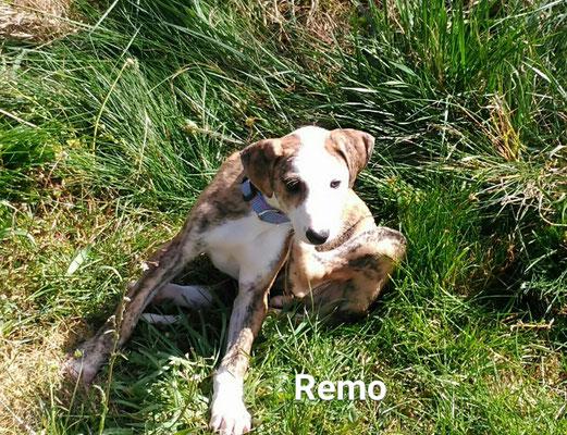 REMO (adopté)