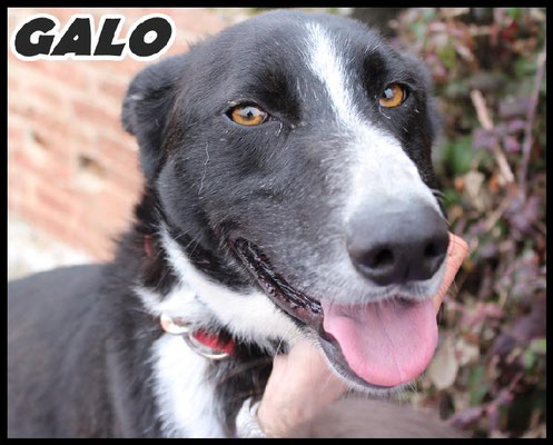 GALO (adopté)